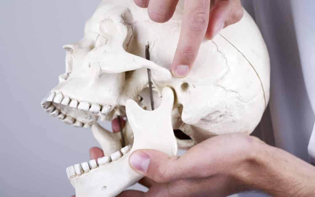 mâchoire carrée os